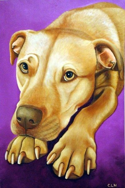 Hey, I found this really awesome Etsy listing at http://www.etsy.com/listing/44518798/american-pit-bull-terrier-dog-8x10-fine