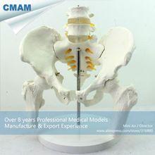 CMAM-PELVIS01 Medical Anatomy Life-Size Pelvic Skeleton Model with Movable Femur Heads and 2pcs Lumbar Vertebrae //Price: $US $68.99 & FREE Shipping //