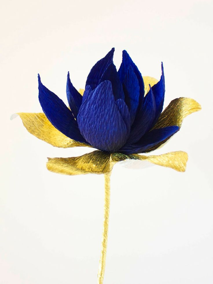 crepe paper blooming waterlily.. tutorials for this flower as a bud, partially blooming and at full bloom..awesome http://papetal.blogspot.com.au/p/flowers_13.html