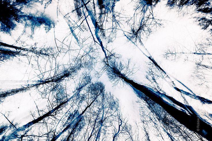 inky trees | Flickr - Photo Sharing!