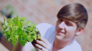 Angelo Dorny. Vergeten groentes. TOMATEN. en tijdschrift de tuin op tafel