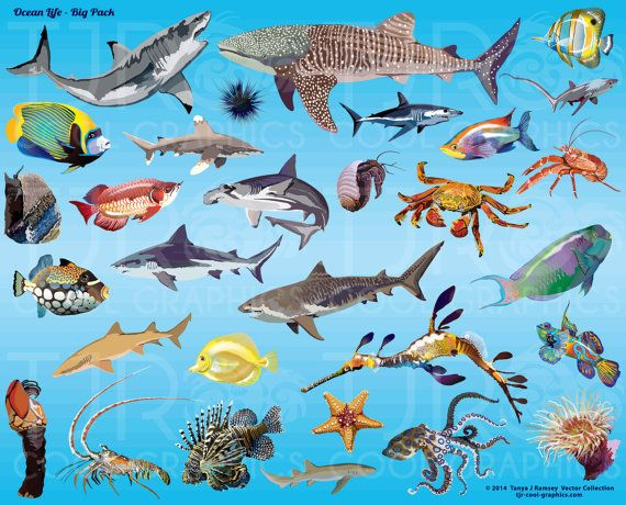 Ocean Life  Big Pack Clip Art by CleverVectors on Etsy