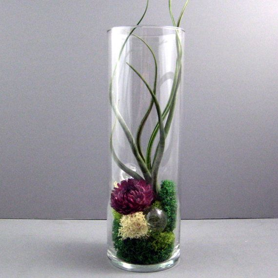 76 best air plant terrariums images on pinterest air for Air plant holder ideas