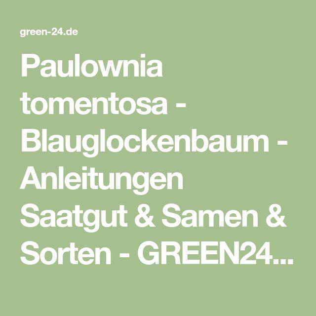 Paulownia tomentosa - Blauglockenbaum - Anleitungen Saatgut & Samen & Sorten - GREEN24 Hilfe Pflege Bilder