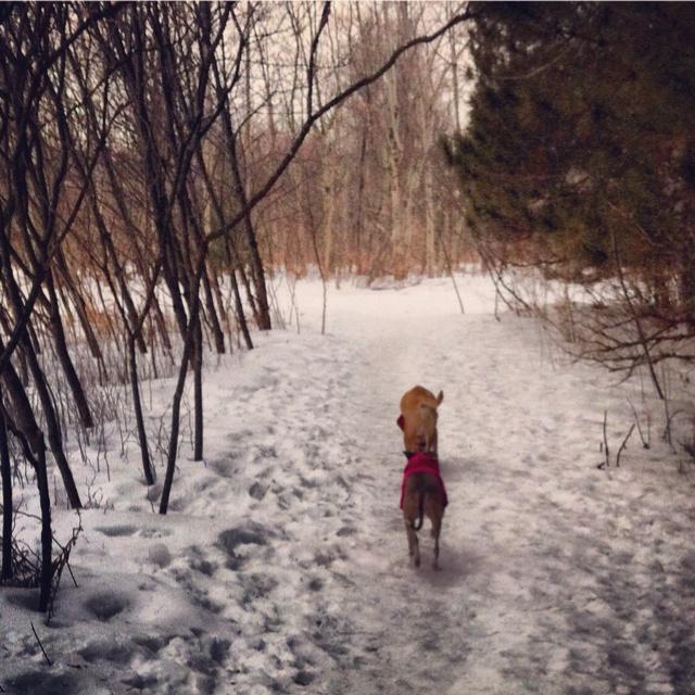 Ottawa's Conroy Dog Park