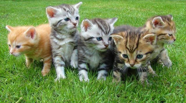 Jak dbać o kota, aby zawsze był zdrowy i pełen energii? #JAK #DBAĆ #O #ZDROWIE #KOTA #KOT