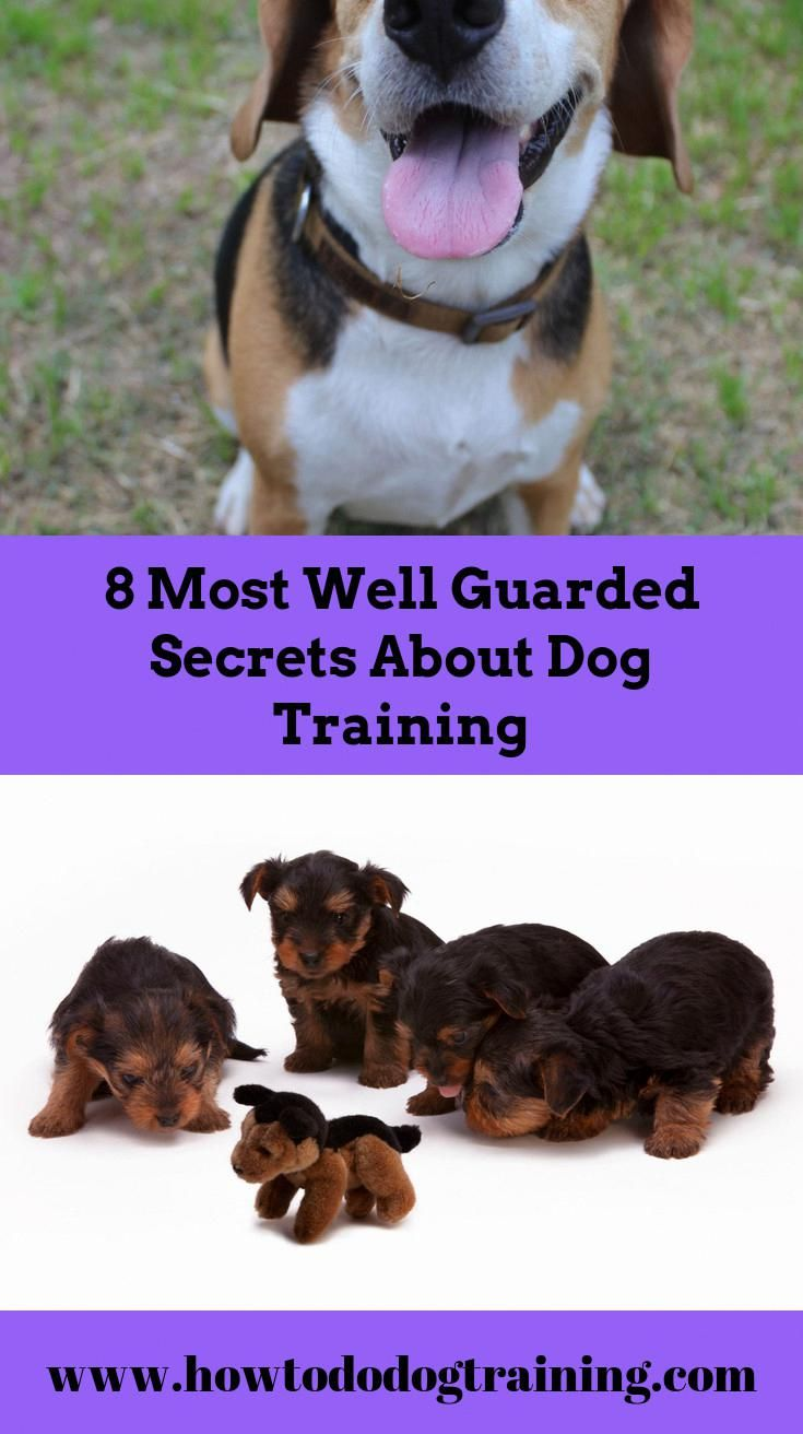 Required Assistance With Pet Dog Training Look At These