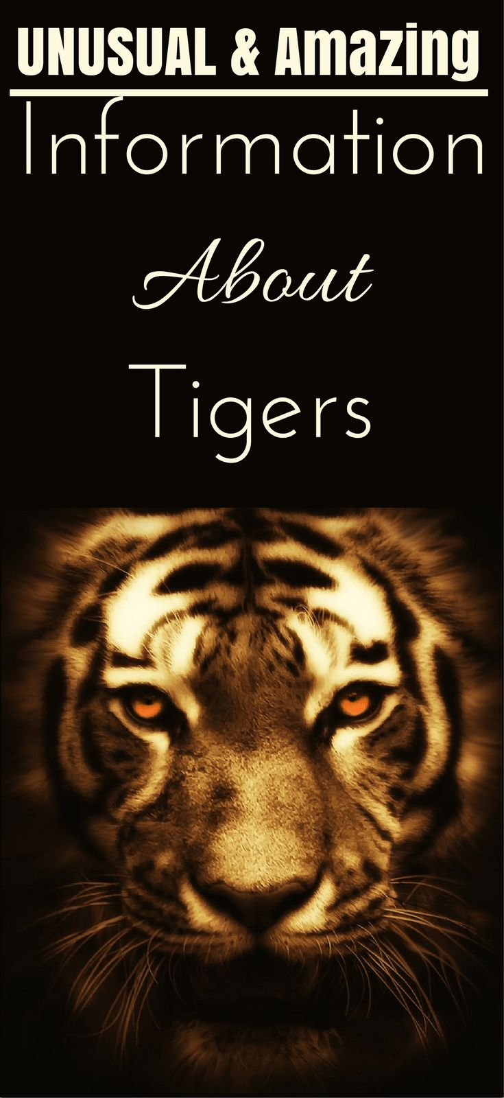 Unusual Amazing Information About Tigers #animals #tiger