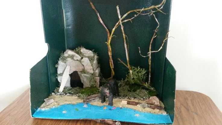 48 best woodland forest diorama project 2nd grade images