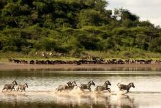Passage To Africa - Lake Ndutu - Tanzania #Zebra #Serengeti