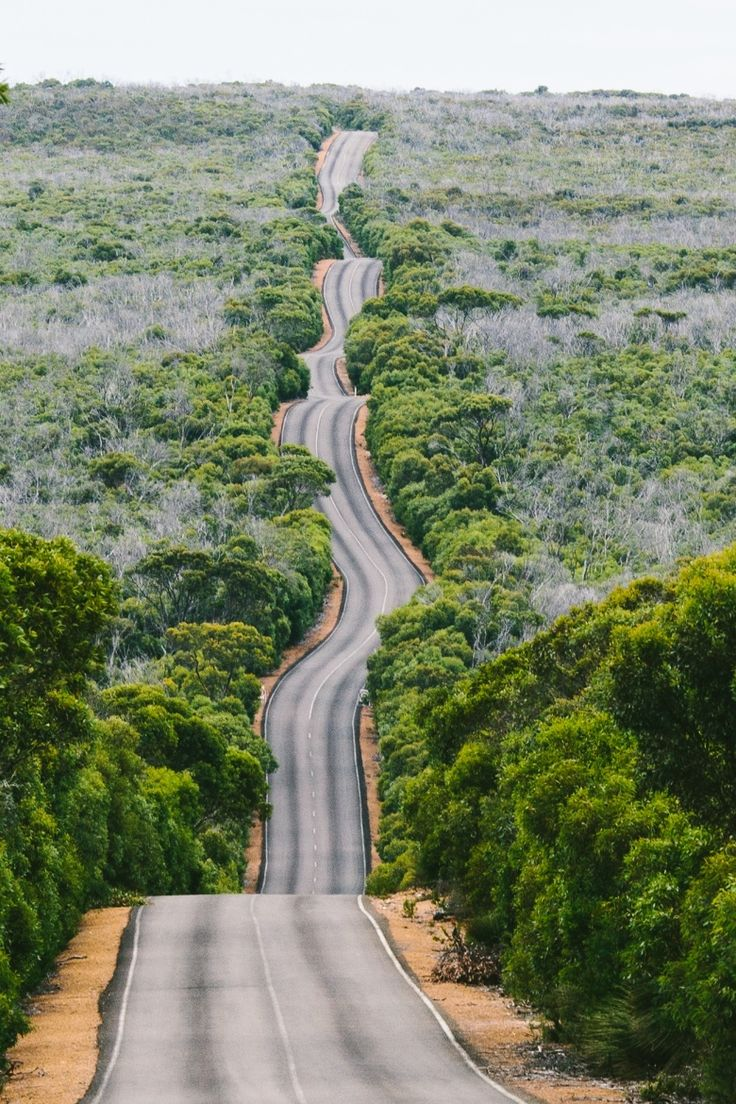 road, kangaroo island, australia - I've been there and it's exactly like this AMAZING!