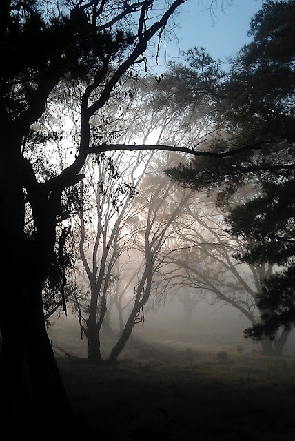 Cold foggy frosty morning in Canberra