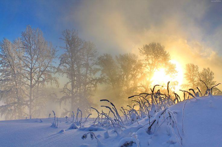 Zima, Wschód słońca, Mgła, Drzewa, Śnieg