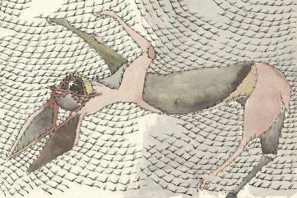 """Obra reciente de F.Toledo """"Ninguna representación es enteramente animal , ni humana"""" F.Toledo"""