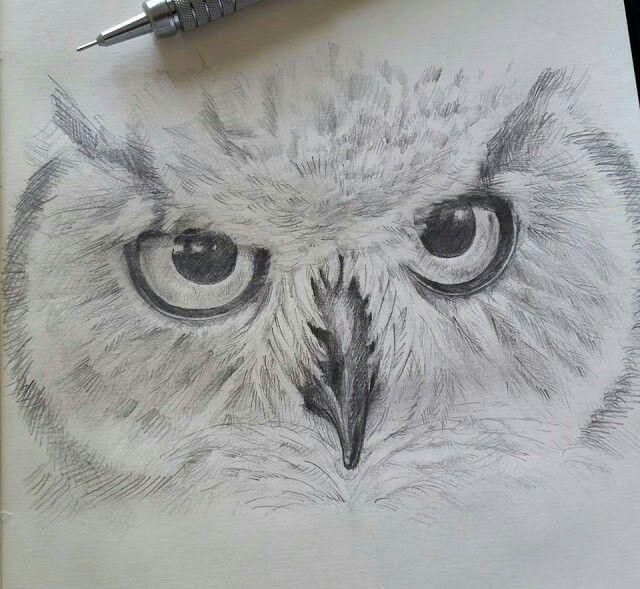 owls part 1