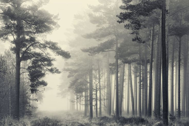 The New Forest by David Baker taken in Hampshire, England. Very atmospheric.