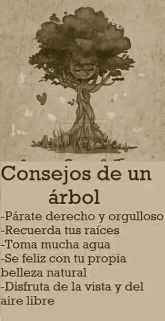 Consejo de un árbol.
