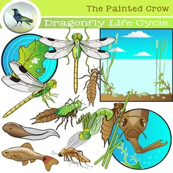 191 Best Images About Secondary Science Clip Art On