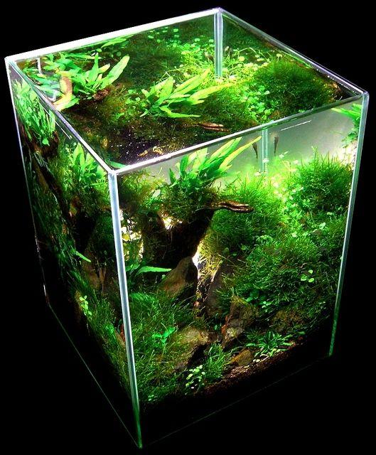 405 best aquarium iwagami style aquaticape aquascape for 405 tropical fish