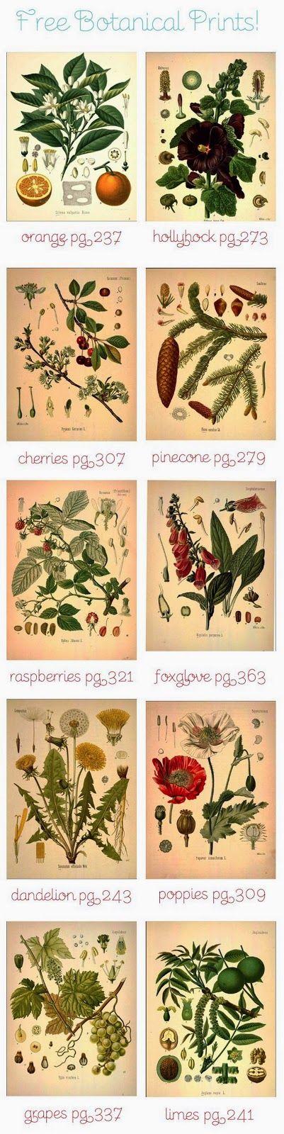 Imprimolandia: Láminas de botánica