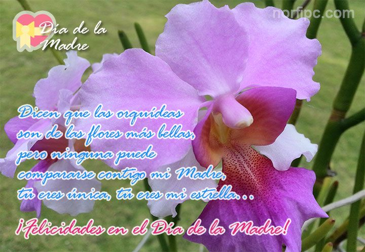 Dicen que las orquídeas son de las flores más bellas, pero ninguna puede compararse contigo mi Madre, tú eres única, tú eres mi estrella.