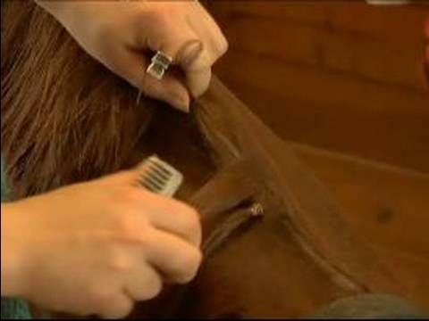 How to Band a Horses Mane : How to Space Sections of a Horse Mane