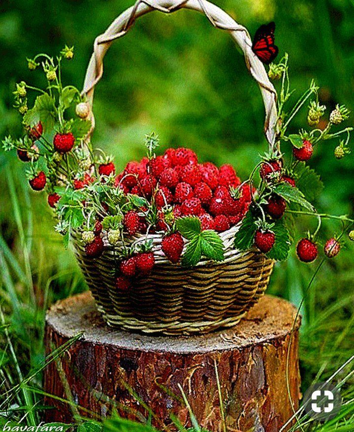 Днем, открытки ягоды цветы