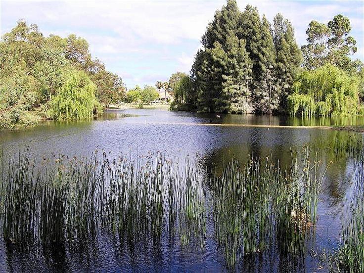 McDougall Lake, Como, Perth, Western Australia