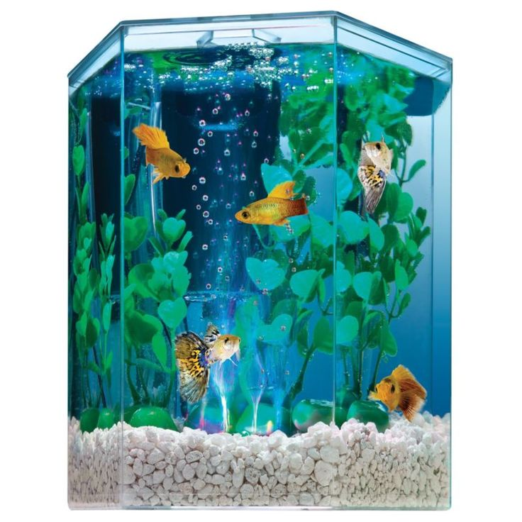 Best 25 hexagon fish tank ideas on pinterest fish tank for Fish tank hood