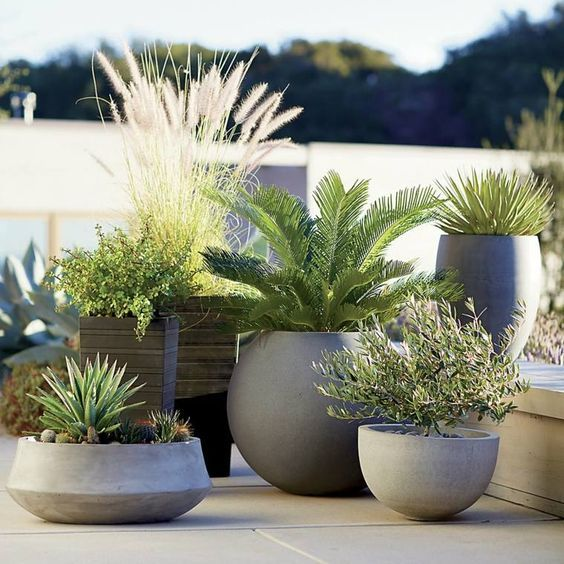 Modern garden design - cluster of lovely potted plants for small spaces.