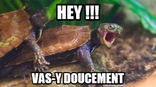 Hey vas-y doucement image drole de tortue