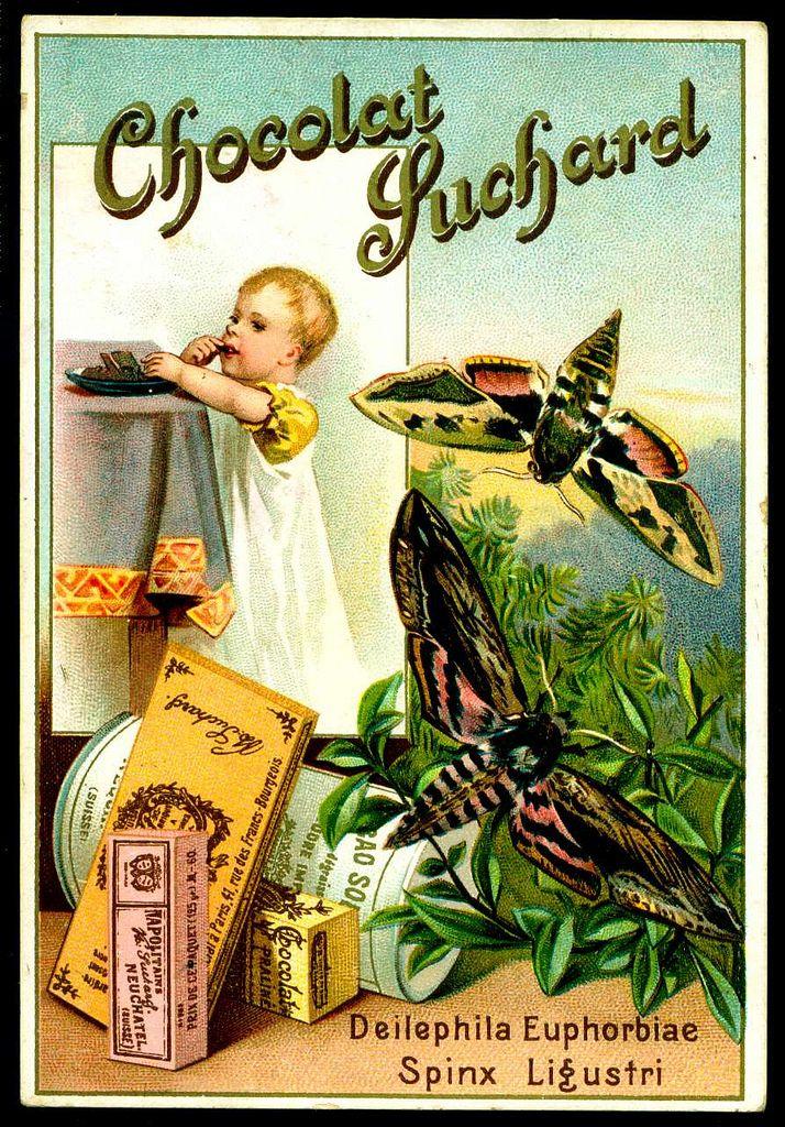 French Tradecard - Sphinx Moth. Suchard Chocolate c1896.