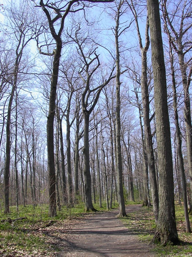 Trail 8 at Lemoine Point CA #trees #nature