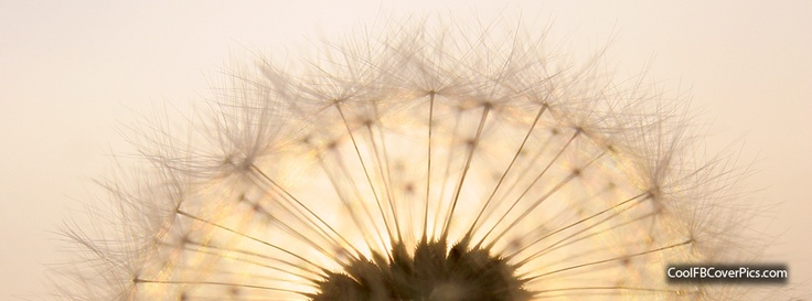 FREE facebook cover pic...dandelion