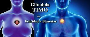 """¿Sabes cómo activar la """"Glándula TIMO"""" que nos da Felicidad y Bienestar?"""