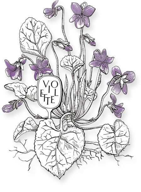 love this illustration from the Diptyque website
