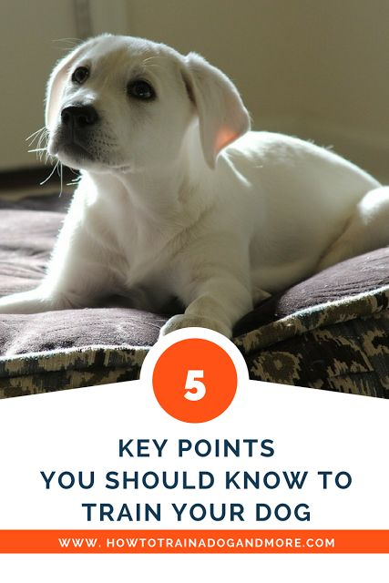As you know, it is very important to train your dog. Training simply means teaching your dog acceptable behavior while discouraging unacceptable behavior. This is all done in a very kind and loving way.Here are 5 key points you should know.