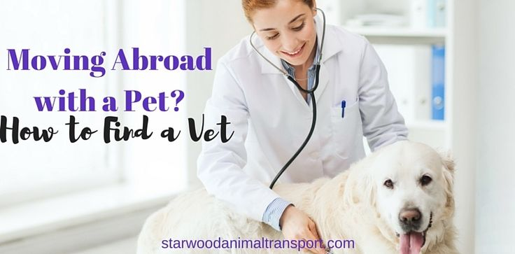 Moving Abroad with a Pet? How to Find a Vet http://www.starwoodanimaltransport.com/blog/moving-abroad-with-a-pet-how-to-find-a-vet @starwoodpetmove