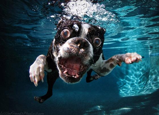 Seth Casteel, Underwater Dog