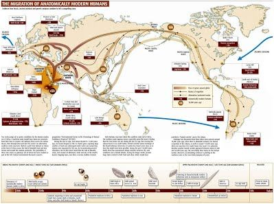 Human Evolution - NCEA Biology