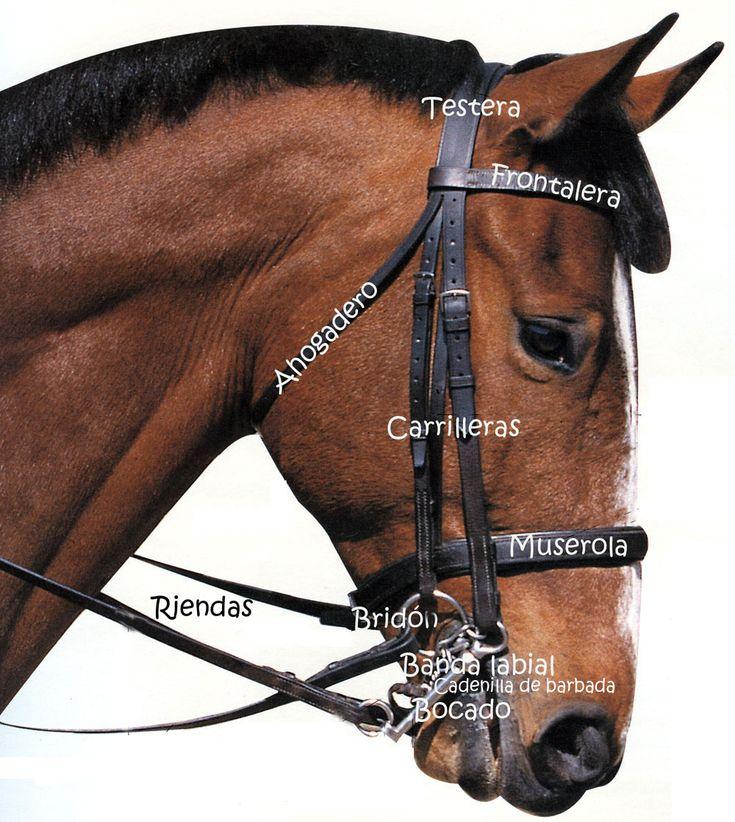 caballos bridas y bocados - Buscar con Google