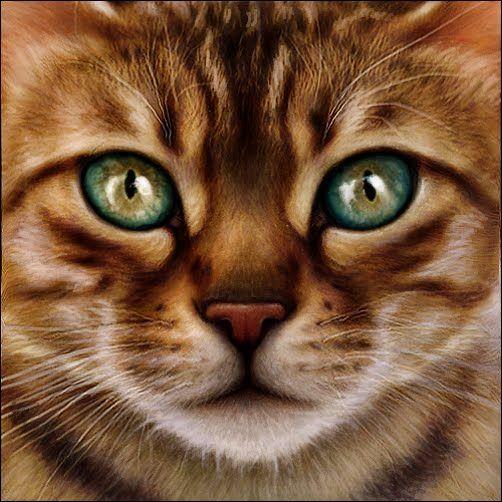 Apprentices Warrior Cats Untold Tales: 215 Best Warriors ( Cats ) Books Images On Pinterest