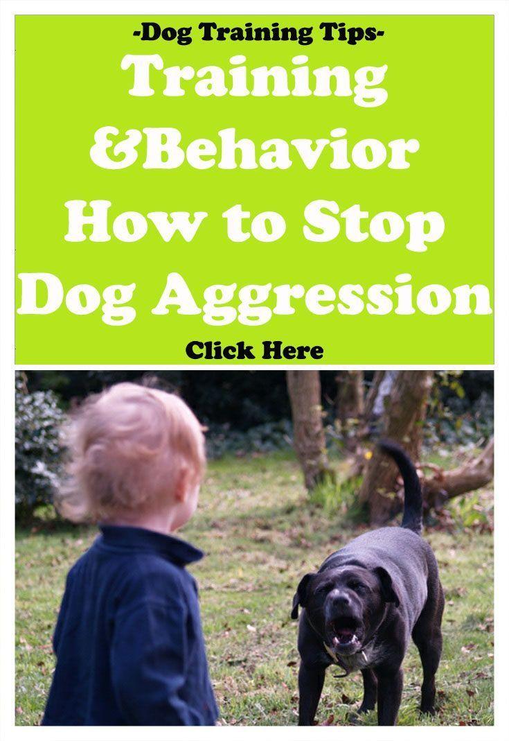 Dog Training Behavior How To Stop Dog Aggression Dogtricks