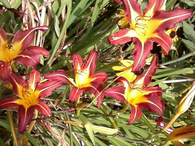 Lily's from a Maaryland Highway rest stop