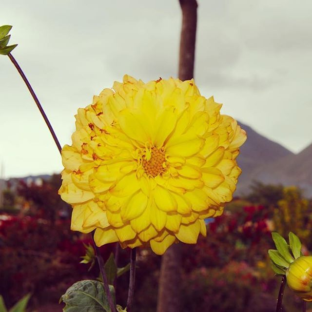 Sometimes we forget the smaller things in life. Sometimes, they are the things that posses equal beauty, just like the peaks we strive for.   Mitad del Mundo, Ecuador 🇪🇨 🌎 Ecuador, though it may be small, it is truly phenomenal. #mitaddelmundo #mitaddelmundoecuador #middleoftheworld #flowers #ecuador #ecuadorianflora #flora #southamerica #discoversouthamerica #andes #andesmountains #inbloom #mountainrange #equator #equatormonument #latinamerica #blog #blogger #travel #travelblogger…