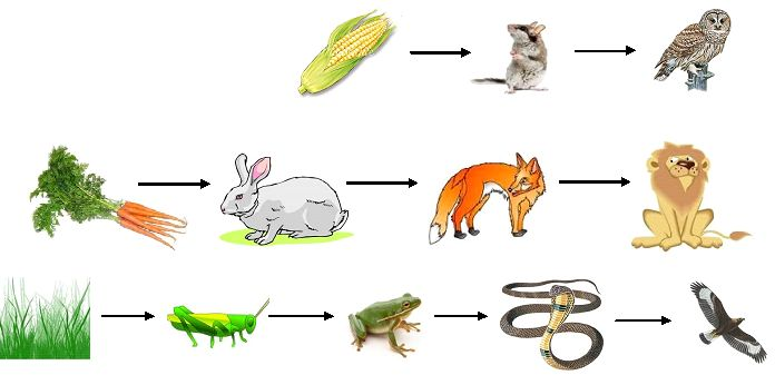 food-chain-1.png (696×337)