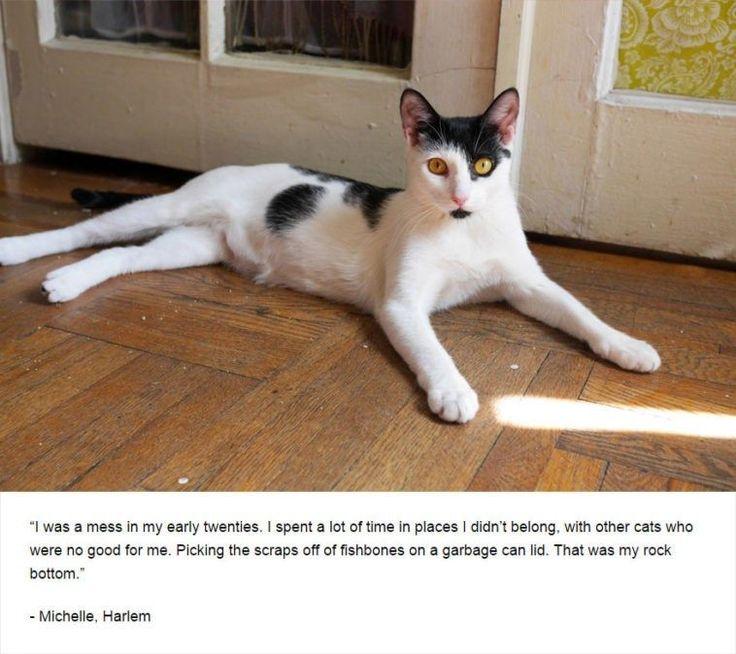 Dark Secrets Revealed By Cats – 16 Pics