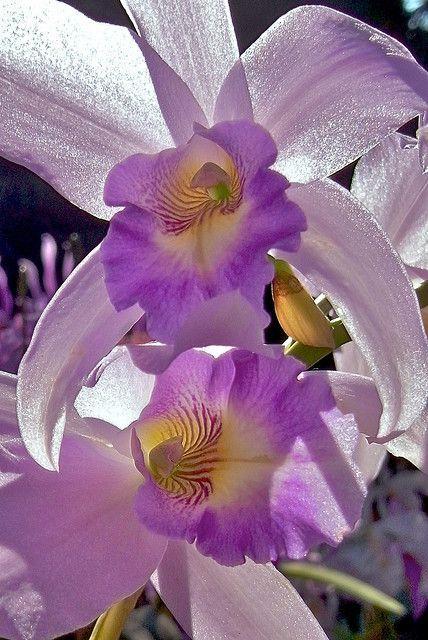 """ Orquídea. Beautiful gorgeous pretty flowers """