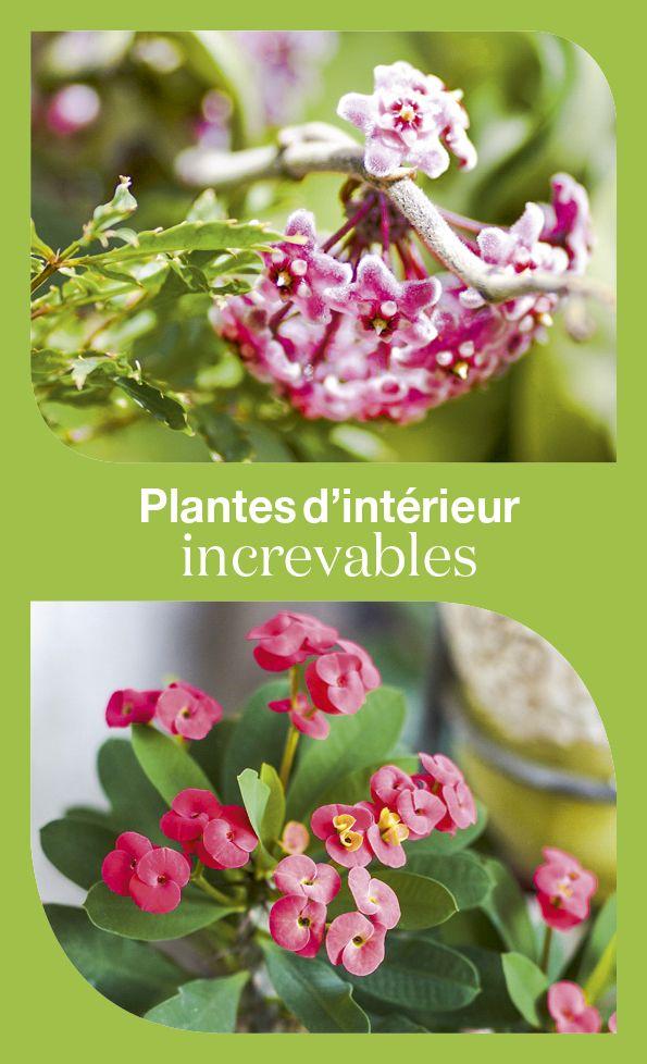 Les 236 meilleures images du tableau plantes d 39 int rieur sur pinterest plantes d 39 int rieur - Plantes d int u00e9rieur faciles d entretien ...