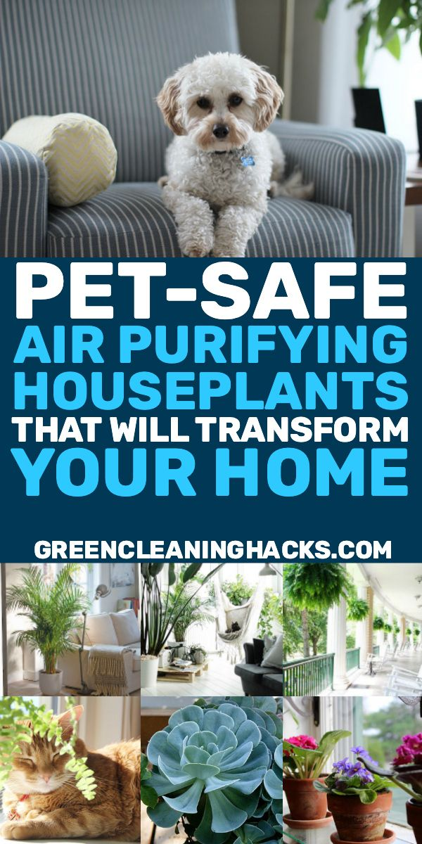 12 Air Purifying Houseplants Safe For Dogs Cats Green Cleaning Hacks Cat Safe House Plants Air Purifier Safe House Plants